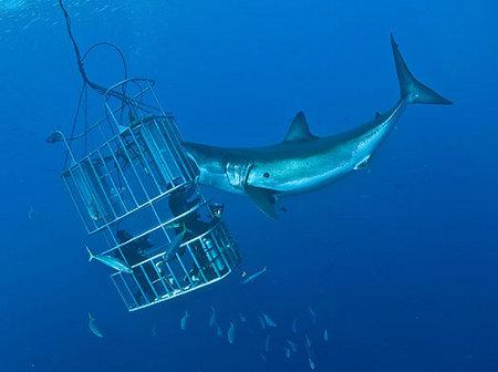 tiburon jaula.jpg